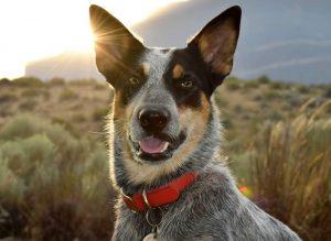 Best waterproof dog collar
